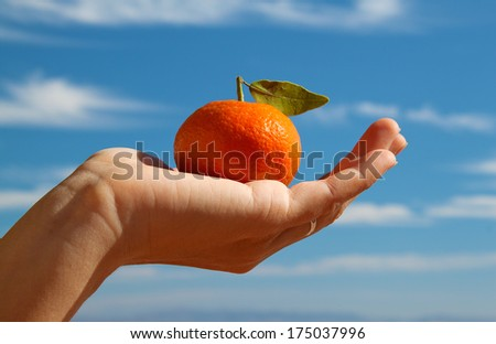 hand holding a tangerine with leaf on blue sky background  - stock photo