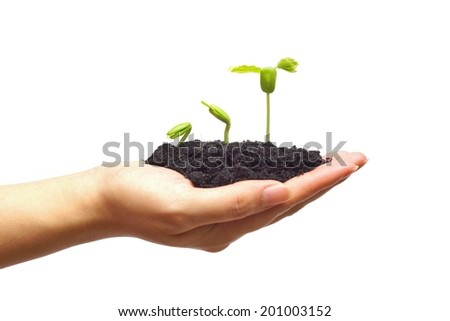hand holding and caring a young green plant growing in a germination sequence on isolated background/ planting tree / growing a tree / plant seedling