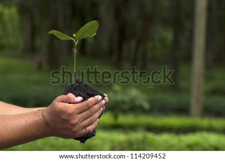 Hand holding and planting new tree with green Forest background - stock photo
