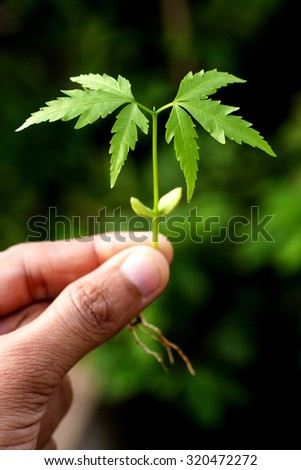 Hand holding baby plant-New life