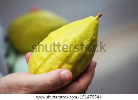 Hand holding citrus. Religious Jews chooses ritual plant - citron- on the bazaar on the eve of Sukkoth. September 22, 2010, Sukkoth market, Bene Brak, Israel - stock photo