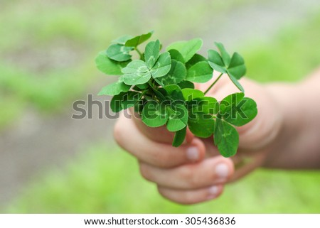 Hand Holding Four Leaf Clover Bouquet  - stock photo