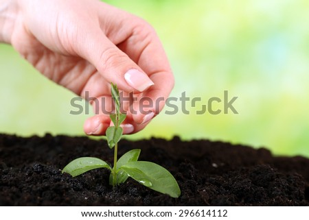 Hand holding green seedlings in soil on bright background - stock photo
