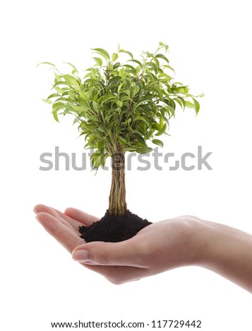 Hand holding green tree isolated on white - stock photo