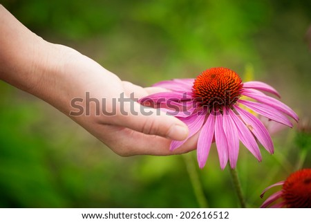 Hand holding head of echinacea flower - stock photo