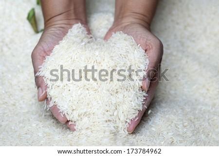 Hand holding jasmine rice, Holding rice. - stock photo