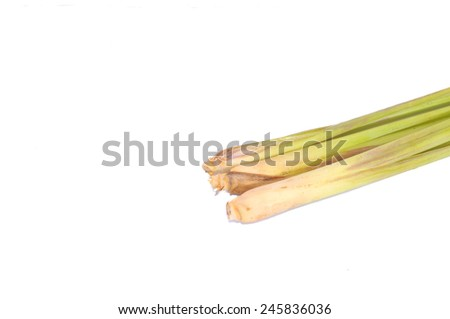 Hand Holding Lemon Grass on white background