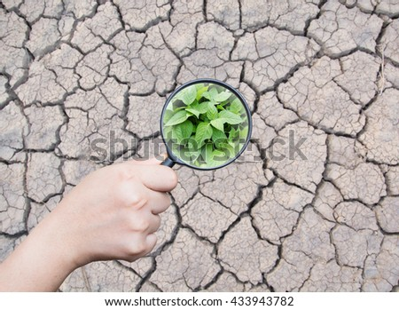 hand holding magnifying find leaf green on dry cracked the earth