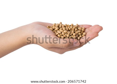 hand holding of soy bean, isolated on white
