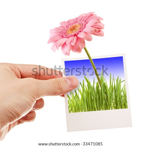 Hand holding photo of a flower - stock photo