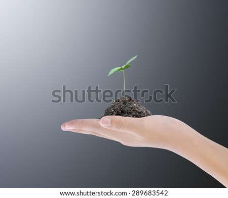 Hand holding plant on dark background  - stock photo