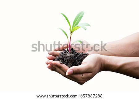 hand holding plant on white background, save the world and World Environment Day concept. subject is blurred