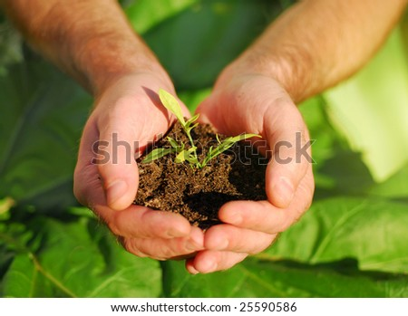 Hand holding plant seed - stock photo