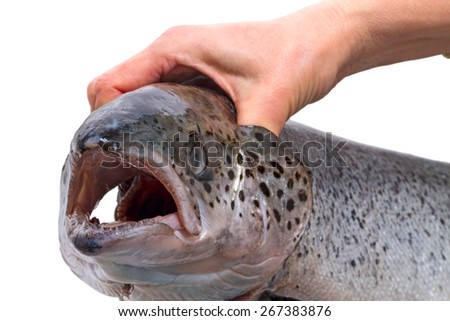 Hand holding salmon by the gills isolated on a white background - stock photo