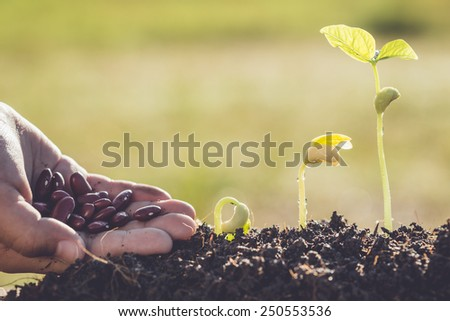 Hand holding seed and growth of young green plant - stock photo
