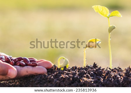 Hand holding seed and growth of young green plant in soil - stock photo