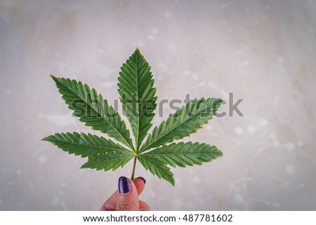 Hand holding single marijuana leaf against light patterned background