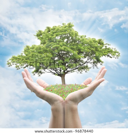 Hand holding tree - stock photo