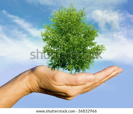 Hand holding tree against blue sky - stock photo