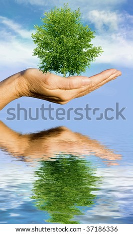 Hand holding tree against blue sky over water - stock photo
