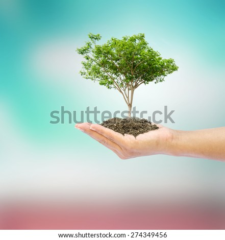 hand holding tree on abstract nature background - stock photo