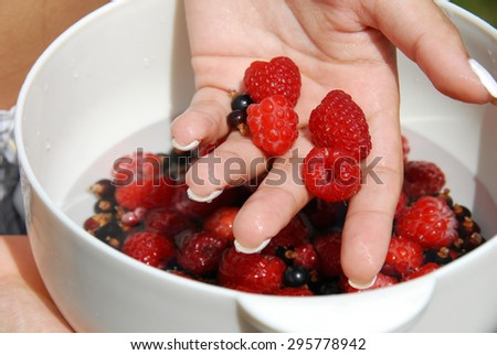 hand holding white bowl with raspberries and black currants - stock photo