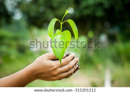 hand holding  young tree in soil for prepare plant on ground,save world concept - stock photo