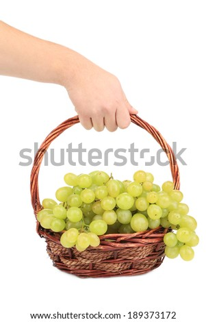 Hand holds white grapes in basket. Isolated on a white background. - stock photo