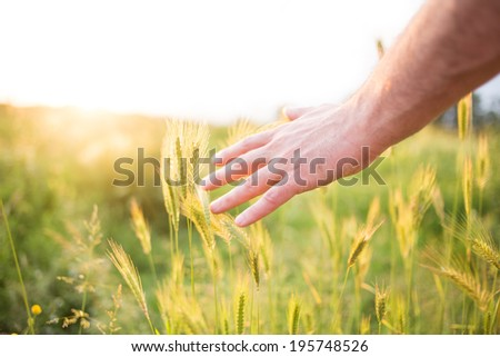 Hand in a field. - stock photo