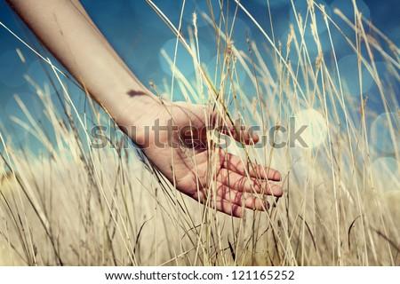 Hand in autumn grass. - stock photo