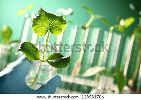 Hand in glove holding a test tube with plant - stock photo