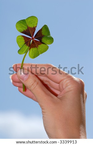 hand is holding a clover - stock photo