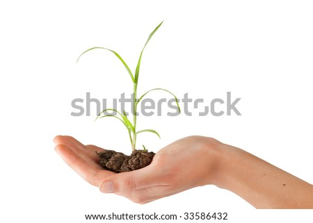 hand is holding a young plant
