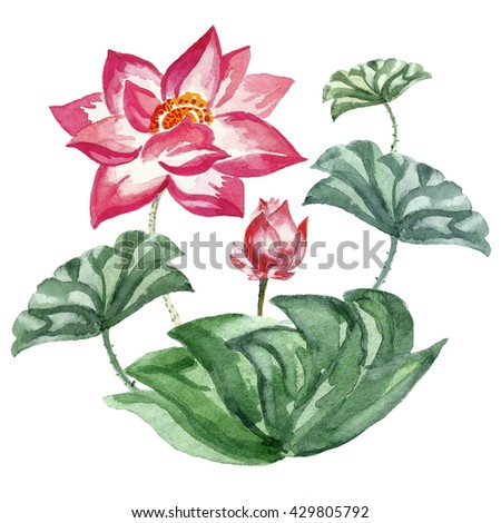 Hand made watercolor card. Red lotus with bud and green leaves on white background. For postcards, congratulations,greetings, invitations, textile print, wallpaper - stock photo