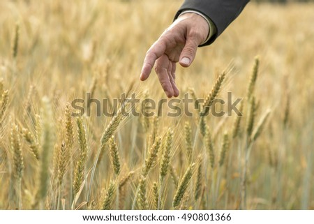 Hand of a businessman in a suit pointing to a ripening ear of fresh wheat in an agricultural field in a conceptual image.