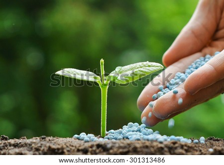 hand of a farmer giving fertilizer to young green plants / nurturing baby plant with chemical fertilizer - stock photo