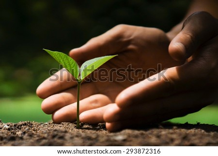 hand of a farmer growing a young plant on fertile soil with vintage tone / nurturing baby plant - stock photo