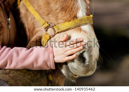 Hand of a young girl stroking her pony on the nose in a show of love and affection - stock photo