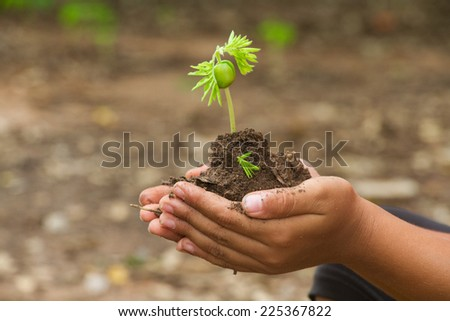 Hand of children to plant seedlings - stock photo