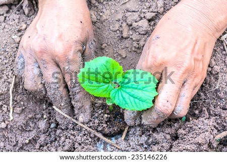 hand of farmers planting a gourd seedling - stock photo