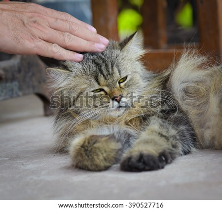 Hand of person stroking head of cute cat.