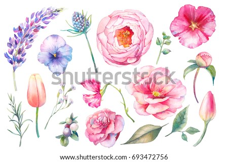 Hand painted floral elements set. Watercolor botanical illustration of tulip, peony, rose, marigold flowers and leaves. Natural objects isolated on white background