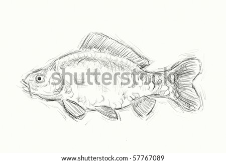 hand painted illustration of a  carp