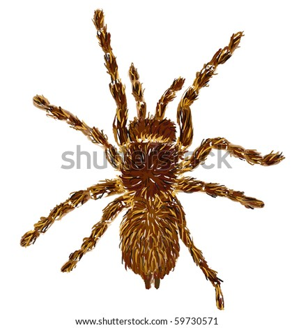 hand painted tarantula on white background - illustration