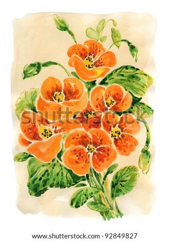 hand painted watercolor: Nasturtium - stock photo