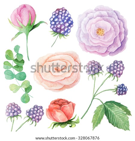Hand painted watercolor roses, peony, blackberry  and leaves. Isolated floral clip art. DIY collection of flower - stock photo