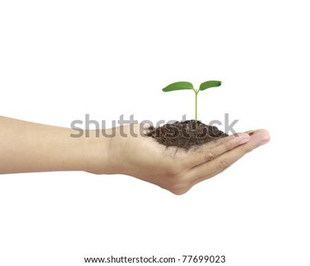 hand plant  tree - stock photo