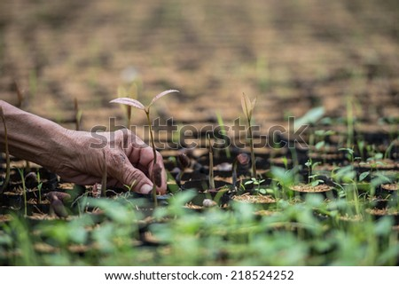 Hand planting a young plant in the farm - stock photo