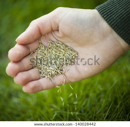Hand planting grass seed for overseeding green lawn care - stock photo