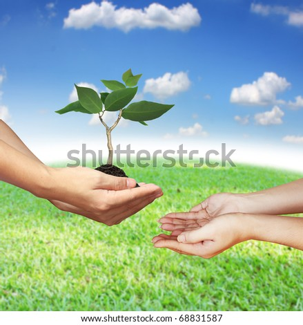 Hand protects a small tree - stock photo